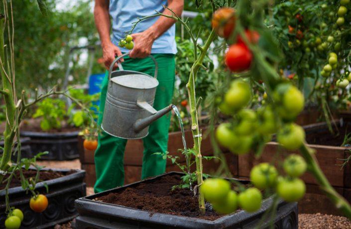 Gardening in prison