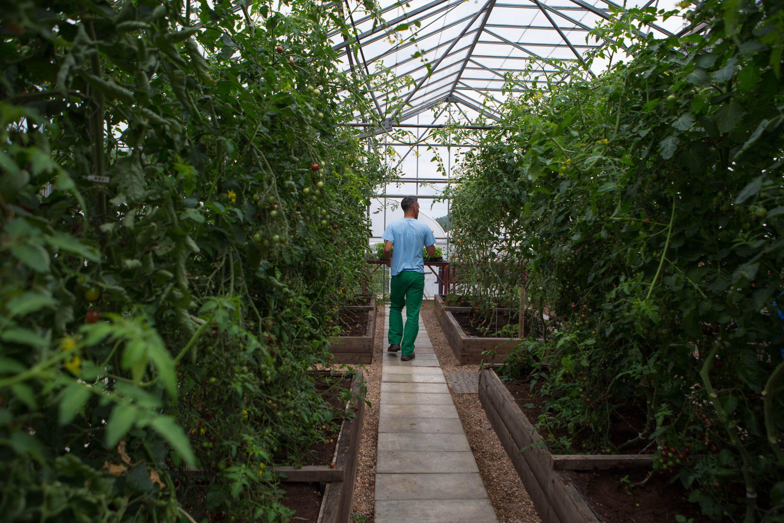 Learner walking in prison greenhouse